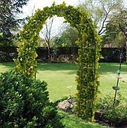 Stai cercando archi per rampicanti lionshome - Archi per giardino ...