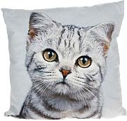 Mini Cat Cushion by Shudehill