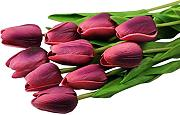 10PCS Tulip Artificial Flower latex Real touch