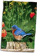 3dRose Eastern Bluebird Maschio su staccionata in