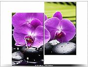 Quadro delicatezza di orchidee orchidee fiori quadri