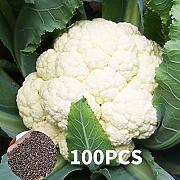 AGROBITS 65A4 Delicious Broccoli Seeds Seeds ica