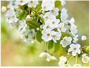 Carta Da Parati Fiori Di Ciliegio : Stai cercando carta da parati fiori lionshome