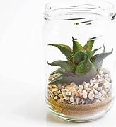 Composizione Piante Grasse In Vaso Di Vetro.Stai Cercando Piante Grasse Rosso Lionshome
