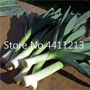 Bloom Green Co. 100 pc Rare Aglio Gigante Cina