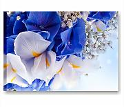 Blue iris - Quadro moderno 70x50 cm stampe su tela intelaiata quadri moderni economici arredamento camera da letto casa salotto ufficio spa centro benessere hotel fiori blu bianchi flower quadri rilassanti bagno stampe canvas interior wall art forniture design decoration centro estetico wellness salone bellezza massaggio yoga meditazione relax