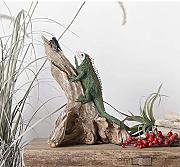 Chitty Display (B) Europea Creativo Lizard