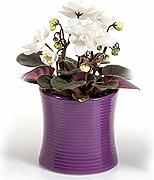 Ciotola in ceramica better-way orchidee vaso