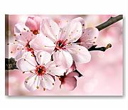 Fiori pesco 7 - Quadro moderno 70x50 cm stampa su tela intelaiata quadri moderni arredamento camera da letto casa salotto ufficio spa centro benessere hotel fiori rosa pesca ciliegio sakura pink cherry blossom flower quadri rilassanti bagno stampe canvas interior wall art forniture design decoration centro estetico wellness salone bellezza massaggio yoga meditazione relax