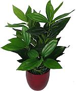 Leaf UK Gardens - Pianta Artificiale, 70 cm,