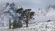 Mountain After Snow Meadow Big Mountain Puzzle 300