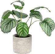 Pianta artificiale Calathea