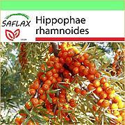 Schisandra chinensis SAFLAX Bacca dei cinque sapori Confezione regalo 15 semi