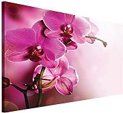 Scaricare PP423O1 design Pink Orchid Tavolo 100 x 75 x 75 cm