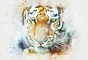 Tiger Abstract Watercolour Stampa Artistica Poster