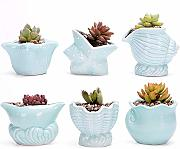 ZHGHS 6pcs Succulente Flower Pot Thumb Basin Conch